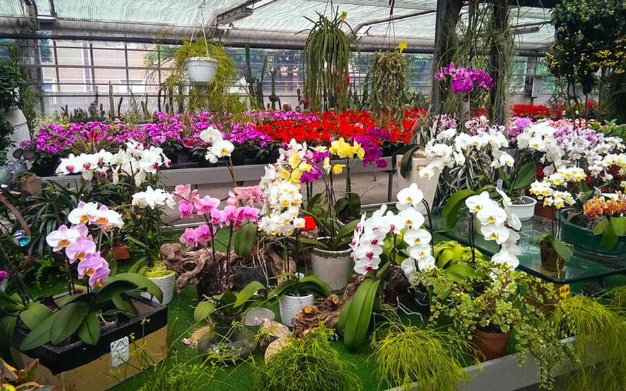 Dalla Regione 800mila euro per sostenere le azienda della floricoltura