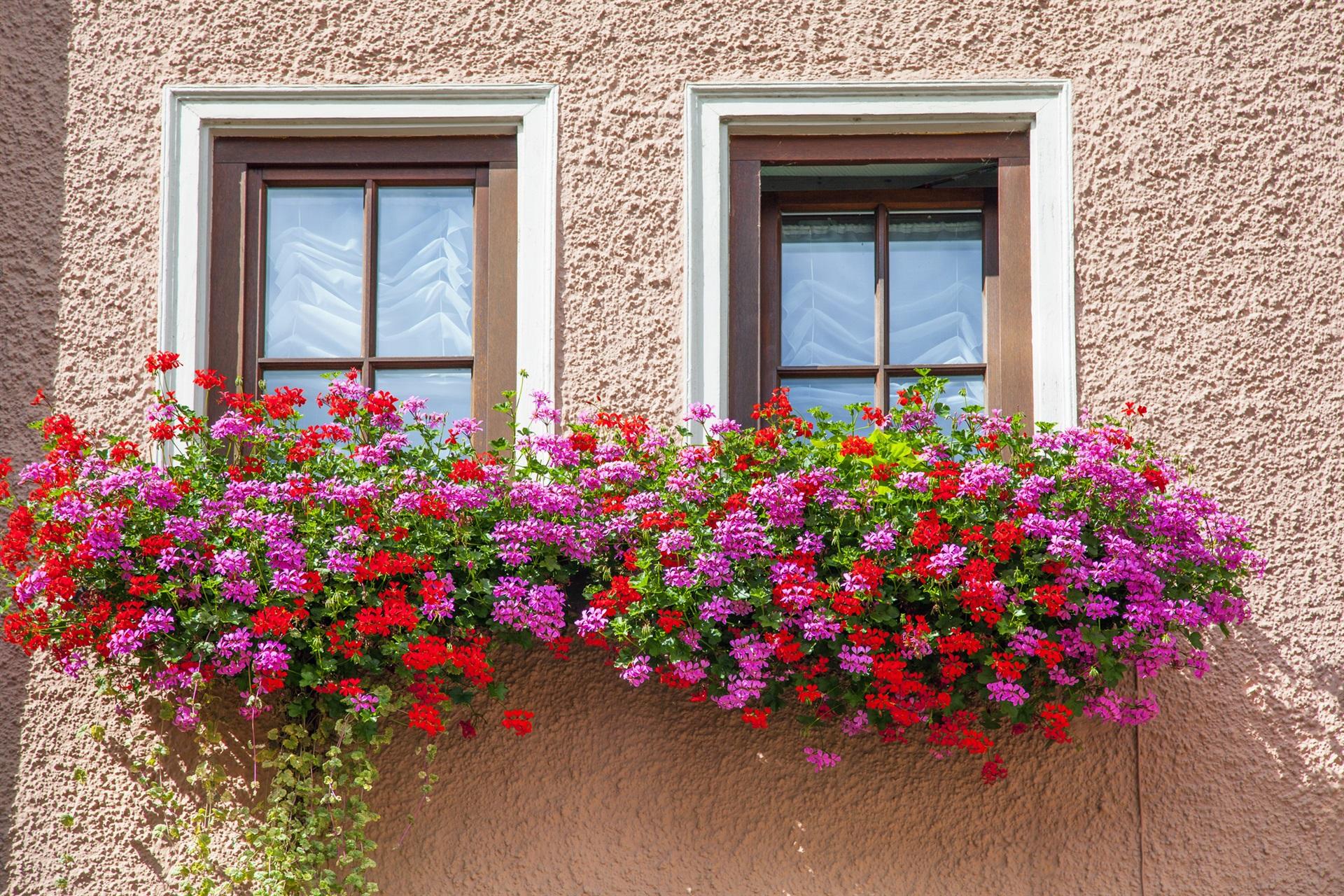 Corona virus, via libera alla vendita di fiori e piante - Notizie | TVL TV  Libera