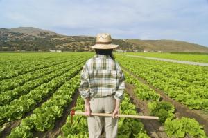 Nuovo bando per l'acquisto di terra da parte di giovani agricoltori
